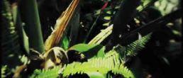 Vistazo al video Yerbatero de Juanes