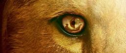 Nuevo Trailer de las Crónicas de Narnia: The Voyage of the Dawn Treader
